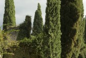 http://gardenpanorama.cz/wp-content/uploads/ninfa011-170x115.jpg