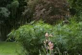 http://gardenpanorama.cz/wp-content/uploads/ninfa022-170x115.jpg