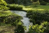 http://gardenpanorama.cz/wp-content/uploads/ninfa024-170x115.jpg