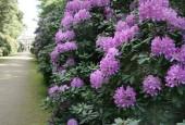 http://gardenpanorama.cz/wp-content/uploads/oranienbaum_img_8435_042-170x115.jpg