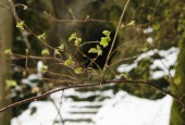 http://gardenpanorama.cz/wp-content/uploads/sanspareil__mg_1606_017-170x115.jpg