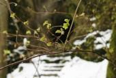 http://gardenpanorama.cz/wp-content/uploads/sanspareil__mg_1606_0171-170x115.jpg