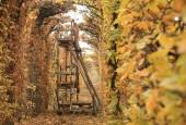 http://gardenpanorama.cz/wp-content/uploads/shonbrunn_img_7558_0031-170x115.jpg