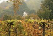 http://gardenpanorama.cz/wp-content/uploads/shonbrunn_img_7604_0081-170x115.jpg