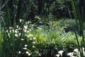 http://gardenpanorama.cz/wp-content/uploads/sken185-170x115.jpg