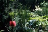 http://gardenpanorama.cz/wp-content/uploads/sken187-170x115.jpg