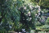 http://gardenpanorama.cz/wp-content/uploads/sken235-170x115.jpg