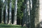http://gardenpanorama.cz/wp-content/uploads/sken243-170x115.jpg