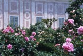 http://gardenpanorama.cz/wp-content/uploads/sken283-170x115.jpg