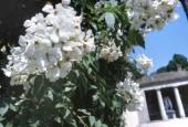 http://gardenpanorama.cz/wp-content/uploads/sken286-170x115.jpg