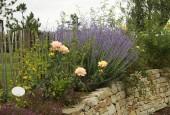 http://gardenpanorama.cz/wp-content/uploads/sonnentor_IMG_8599_003-170x115.jpg