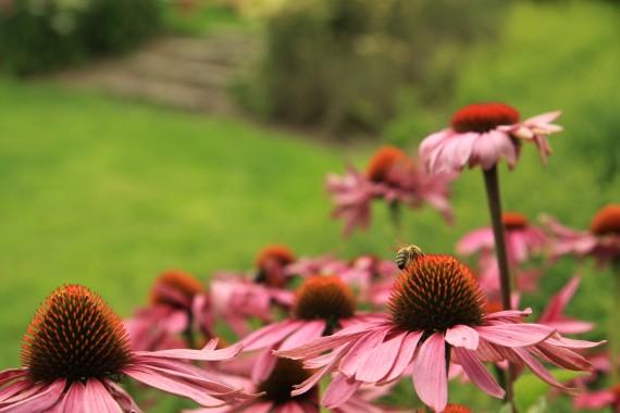 Sonnentor, bylinkové zahrady
