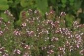 http://gardenpanorama.cz/wp-content/uploads/sonnentor_IMG_8609_008-170x115.jpg