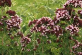 http://gardenpanorama.cz/wp-content/uploads/sonnentor_IMG_8613_011-170x115.jpg