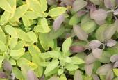 http://gardenpanorama.cz/wp-content/uploads/sonnentor_IMG_8615_012-170x115.jpg