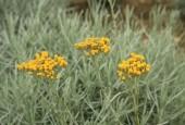 http://gardenpanorama.cz/wp-content/uploads/sonnentor_IMG_8617_013-170x115.jpg