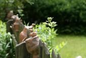 http://gardenpanorama.cz/wp-content/uploads/strz_img_9166_017-170x115.jpg