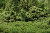 http://gardenpanorama.cz/wp-content/uploads/strz_img_9173_019-170x115.jpg