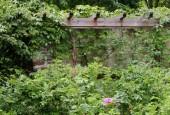 http://gardenpanorama.cz/wp-content/uploads/strz_img_9180_021-170x115.jpg
