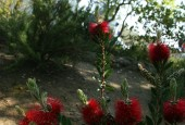 http://gardenpanorama.cz/wp-content/uploads/tarotova_zahrada15-170x115.jpg