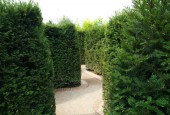 http://gardenpanorama.cz/wp-content/uploads/trauttmansdorffimg_5701_006-170x115.jpg