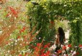 http://gardenpanorama.cz/wp-content/uploads/trauttmansdorffimg_5770_018-170x115.jpg
