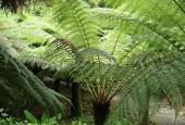 http://gardenpanorama.cz/wp-content/uploads/trebach_img_2510_0031-170x115.jpg