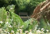 http://gardenpanorama.cz/wp-content/uploads/trebach_img_2521_006-170x115.jpg