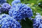 http://gardenpanorama.cz/wp-content/uploads/trebach_img_2528_007-170x115.jpg