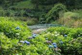 http://gardenpanorama.cz/wp-content/uploads/trebach_img_2540_0091-170x115.jpg
