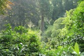http://gardenpanorama.cz/wp-content/uploads/trebach_img_2567_013-170x115.jpg