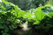 http://gardenpanorama.cz/wp-content/uploads/trebachimg_2526_16-170x115.jpg