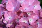 http://gardenpanorama.cz/wp-content/uploads/trelissick008-170x115.jpg