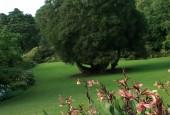 http://gardenpanorama.cz/wp-content/uploads/trelissick021-170x115.jpg