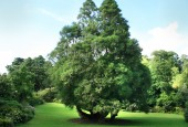 http://gardenpanorama.cz/wp-content/uploads/trelissick023-170x115.jpg