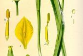 http://gardenpanorama.cz/wp-content/uploads/tulipan-170x115.jpg