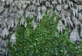 http://gardenpanorama.cz/wp-content/uploads/valdstejnska_img_8983_004-170x115.jpg