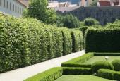 http://gardenpanorama.cz/wp-content/uploads/valdstejnska_img_8999_009-170x115.jpg