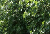 http://gardenpanorama.cz/wp-content/uploads/velka-palfiovska_img_9041_04-170x115.jpg