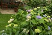 http://gardenpanorama.cz/wp-content/uploads/vikend_praha_IMG_6643_06-170x115.jpg
