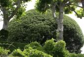 http://gardenpanorama.cz/wp-content/uploads/villa_balbianello_img_9743_040-170x115.jpg