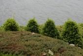http://gardenpanorama.cz/wp-content/uploads/villa_balbianello_img_9769_047-170x115.jpg