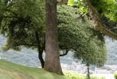 http://gardenpanorama.cz/wp-content/uploads/villa_balbianello_img_9774_049-170x115.jpg