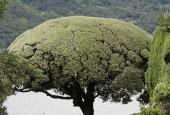 http://gardenpanorama.cz/wp-content/uploads/villa_balbianello_img_9792_052-170x115.jpg