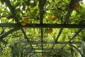 http://gardenpanorama.cz/wp-content/uploads/villa_carlotta_img_9860_0071-170x115.jpg