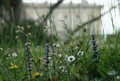http://gardenpanorama.cz/wp-content/uploads/villa_farnese-25-170x115.jpg