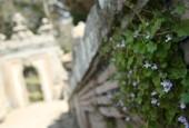 http://gardenpanorama.cz/wp-content/uploads/villa_farnese_img_7057_015-170x115.jpg