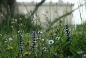 http://gardenpanorama.cz/wp-content/uploads/villa_farnese_img_7093_025-170x115.jpg