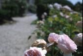 http://gardenpanorama.cz/wp-content/uploads/villa_garzoni_sken180_001-170x115.jpg