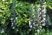 http://gardenpanorama.cz/wp-content/uploads/villa_garzoni_sken184_004-170x115.jpg